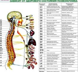 Семинар-обучение ипосвящение вметодику «Божественное выравнивание тела»