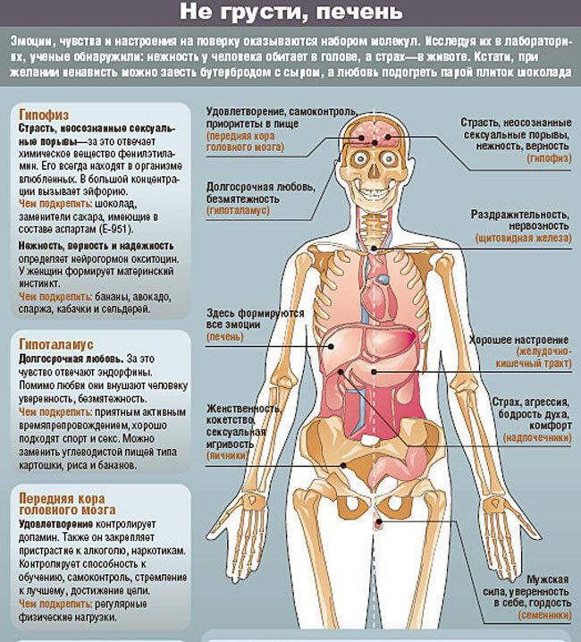 Психосоматика заболеваний: обида в почках, жадность в кишечнике.