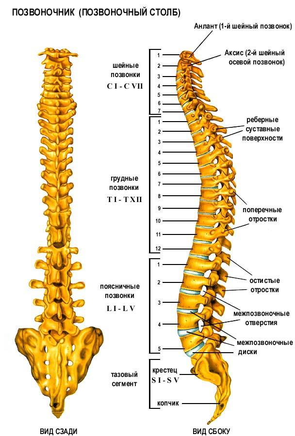 Как ваше психоэмоциональное состояние отражается на состоянии здоровья Вашей спины.