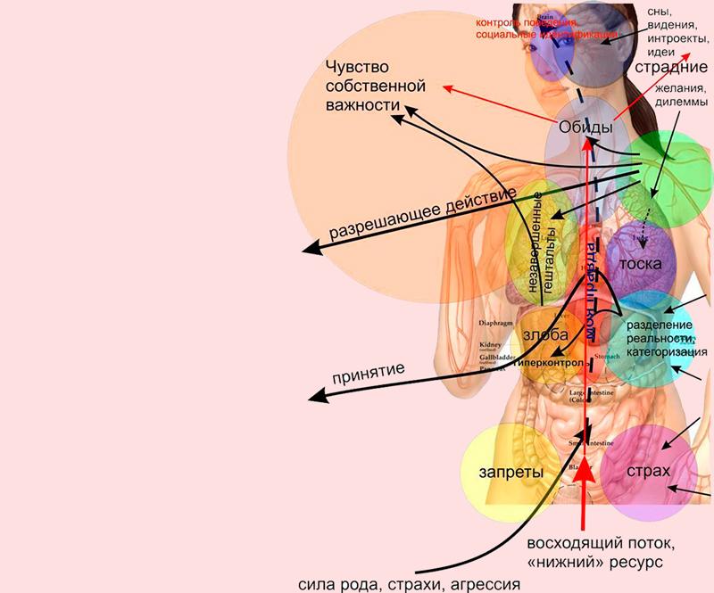 ПСИХОСОМАТИКА: Какие причины лежат в основе популярных заболеваний