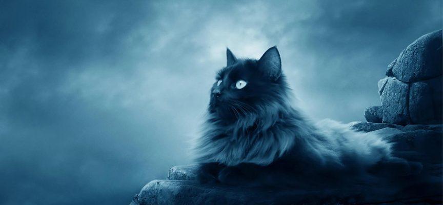 10 магических тайн вашей кошки.
