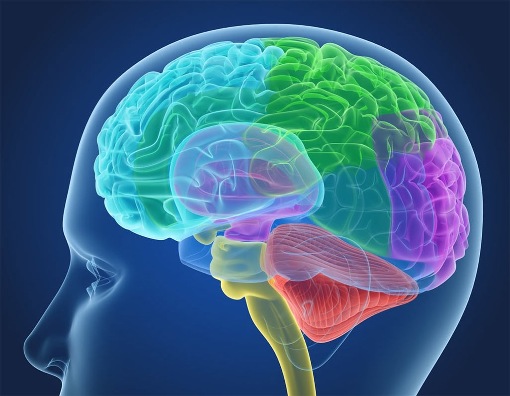 Активность мозга – главный фактор долгожительства и здоровья